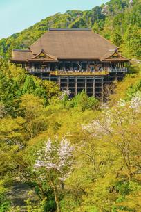 関西の風景 京都市 春の清水寺本堂の写真素材 [FYI04868992]