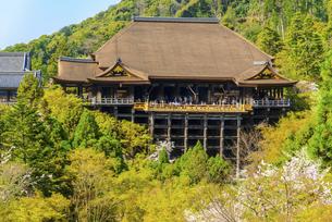関西の風景 京都市 春の清水寺本堂の写真素材 [FYI04868993]