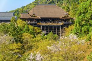 関西の風景 京都市 春の清水寺本堂の写真素材 [FYI04868995]