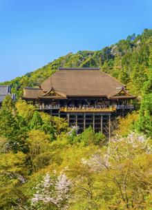 関西の風景 京都市 春の清水寺本堂の写真素材 [FYI04868996]
