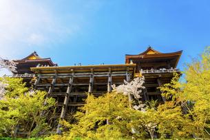 関西の風景 京都市 春の清水寺本堂の写真素材 [FYI04868997]