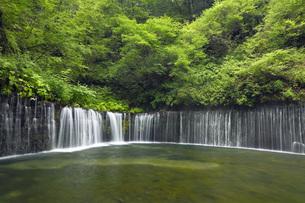 夏の軽井沢 白糸の滝 長野県の写真素材 [FYI04869136]