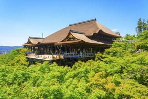 関西の風景 京都市 新緑の清水寺本堂の写真素材 [FYI04869184]