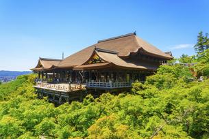 関西の風景 京都市 新緑の清水寺本堂の写真素材 [FYI04869187]