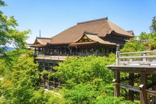関西の風景 京都市 新緑の清水寺本堂の写真素材 [FYI04869189]