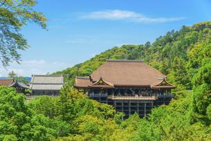 関西の風景 京都市 新緑の清水寺本堂の写真素材 [FYI04869192]