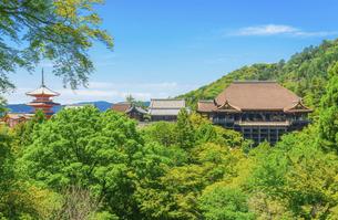 関西の風景 京都市 新緑の清水寺景観の写真素材 [FYI04869193]