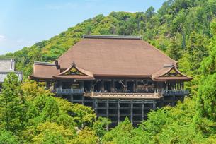 関西の風景 京都市 新緑の清水寺本堂の写真素材 [FYI04869194]