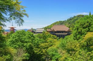 関西の風景 京都市 新緑の清水寺景観の写真素材 [FYI04869196]