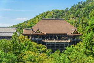 関西の風景 京都市 新緑の清水寺本堂の写真素材 [FYI04869198]