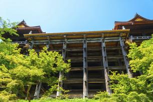関西の風景 京都市 新緑の清水寺本堂の写真素材 [FYI04869199]
