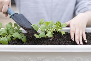 苗を植える手の写真素材 [FYI04869226]