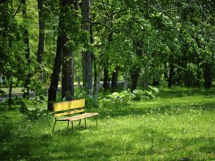 緑の森の黄色いベンチの写真素材 [FYI04869252]