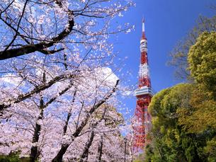 東京タワーと桜並木 東京都の写真素材 [FYI04869309]
