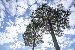 木のある風景の写真素材 [FYI04869476]