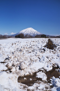 羊蹄山と雪割りの農地の写真素材 [FYI04869513]