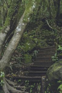 鹿児島県の日本100名山、開聞岳の山道の木の階段の写真素材 [FYI04869578]