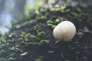 鹿児島県の日本100名山、開聞岳の山道で見つけたキノコの写真素材 [FYI04869610]