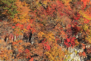 霧降ノ滝の紅葉の写真素材 [FYI04869639]