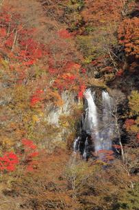 霧降ノ滝の紅葉の写真素材 [FYI04869640]