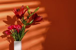 オレンジ色の壁背景の百合とイロマツヨイグサの写真素材 [FYI04869653]