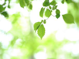 緑の葉の写真素材 [FYI04870141]
