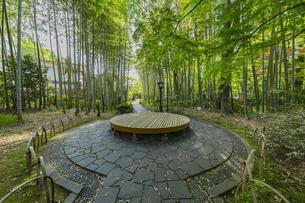 修善寺温泉 新緑に囲まれる竹林の小径と中央広場に置かれた円形ベンチ(西側の風景)の写真素材 [FYI04870307]