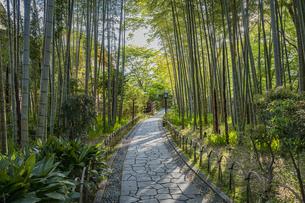 修善寺温泉 新緑に囲まれた竹林の小径と木漏れ日(東側から西側への風景)の写真素材 [FYI04870317]
