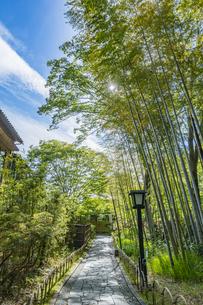 修善寺温泉 新緑に囲まれた竹林の小径と太陽(東側から西側への風景)の写真素材 [FYI04870319]
