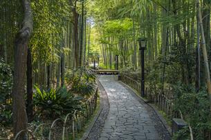 修善寺温泉 新緑に囲まれた竹林の小径(東側から西側への風景)の写真素材 [FYI04870322]