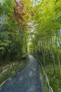 修善寺温泉 新緑に囲まれた竹林の小径と太陽(東側から西側への風景)の写真素材 [FYI04870327]