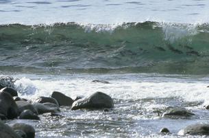 海岸に群れるサケ(北海道・知床)の写真素材 [FYI04870590]