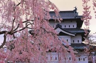 弘前公園 弘前城天守と枝垂れ桜の写真素材 [FYI04870614]