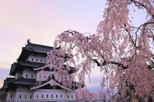 弘前公園 弘前城天守と枝垂れ桜の写真素材 [FYI04870615]