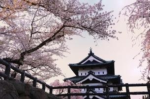 弘前公園 弘前城天守と桜の写真素材 [FYI04870616]