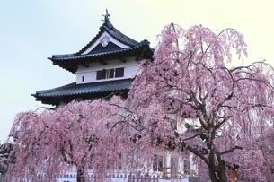 弘前公園 弘前城天守と枝垂れ桜の写真素材 [FYI04870618]