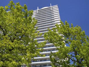 横浜ポートサイド地区の高層マンション街 神奈川県の写真素材 [FYI04871054]