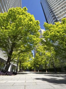 新緑の高層マンション街の写真素材 [FYI04871063]