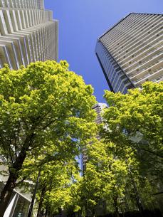 新緑の高層マンション街の写真素材 [FYI04871065]