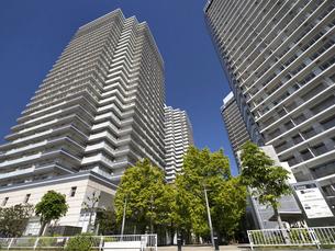 新緑の高層マンション街の写真素材 [FYI04871067]