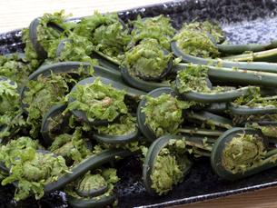 山菜 コゴミの写真素材 [FYI04871161]