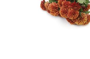 菊の花束の写真素材 [FYI04871244]