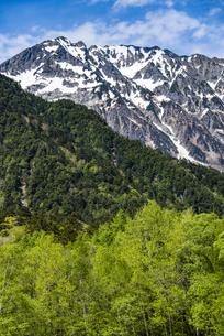 上高地:奥穂高岳と新緑の写真素材 [FYI04871339]