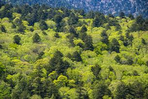 上高地の新緑の写真素材 [FYI04871340]