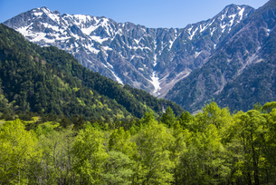 上高地:穂高連峰と新緑の写真素材 [FYI04871353]