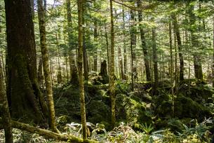上高地の森の写真素材 [FYI04871356]