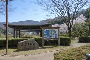 花はす公園の桜の写真素材 [FYI04871405]