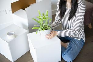 引越しの段ボールに囲まれて植物の鉢を持っている女性の写真素材 [FYI04872072]