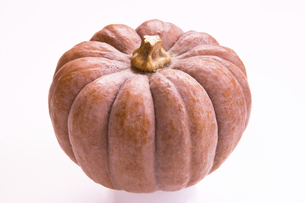 菊座南瓜(小菊かぼちゃ)の写真素材 [FYI04872529]