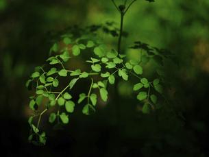 葉の写真素材 [FYI04872719]